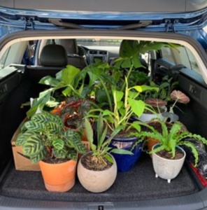 5 Tips For Moving Plants